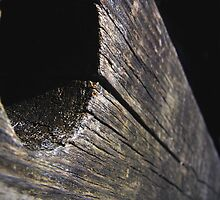 the wood by georgeisme