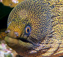 Moray Eel by Melissa Fiene