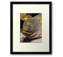 Moray Eel Framed Print