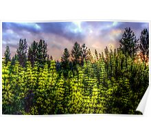 Colors of the Park ~ HDR Series ~  Poster