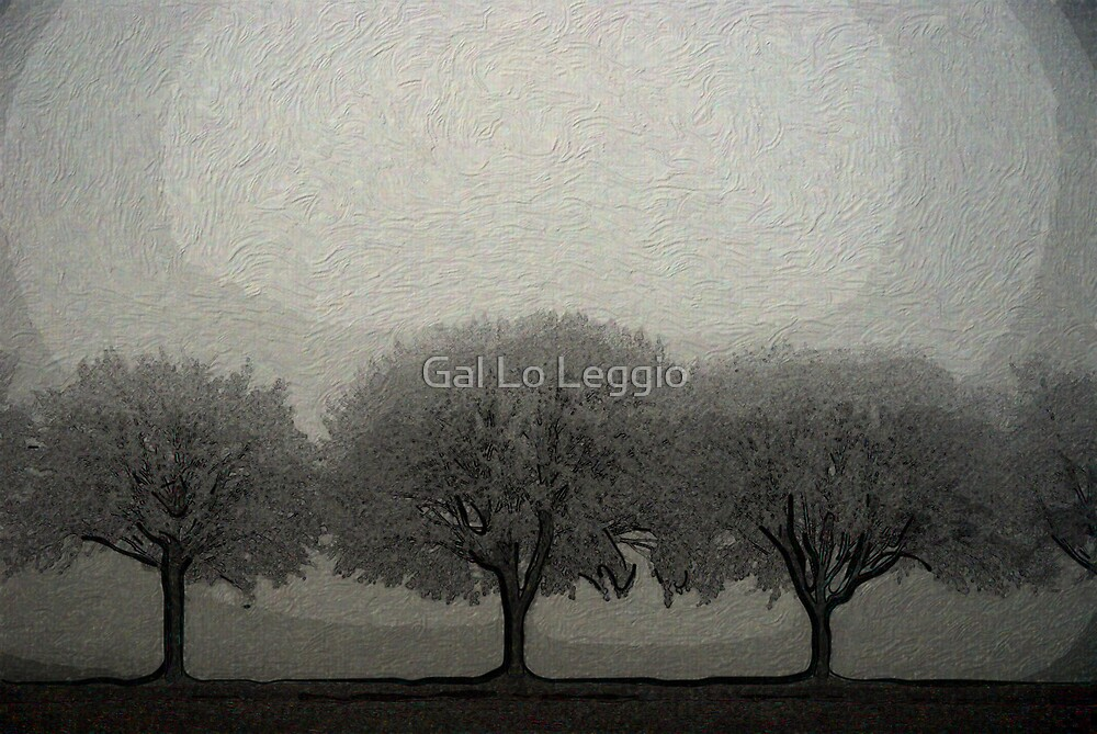 Trees in a Line by Gal Lo Leggio