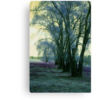 Line of Weeping Willow Trees Canvas Print