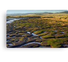 Wetlands, Launceston, Tasmania. Canvas Print