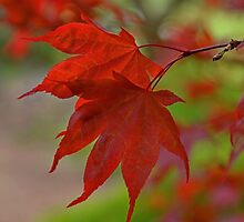 Red Leaves by Lena127