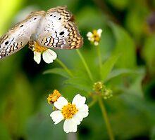 Butterfly Fairy by hmclark