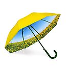 Umbrella with sunflower valley and blue sky view by Bruno Beach