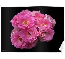Roses on Black Velvet Poster