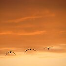 The Trio Of Birds by Linda Miller Gesualdo