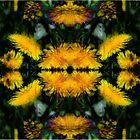 Pretty Dandelions by vigor