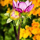 Flowers by DoraBirgis