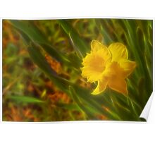 Jonquil Poster
