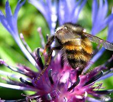 Bee On Flower by Dawn Palmerley