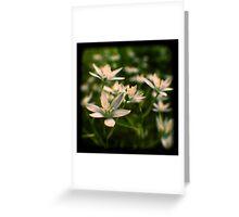 star of david flowers Greeting Card