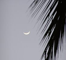 Palm & Moon by Tim Stringer