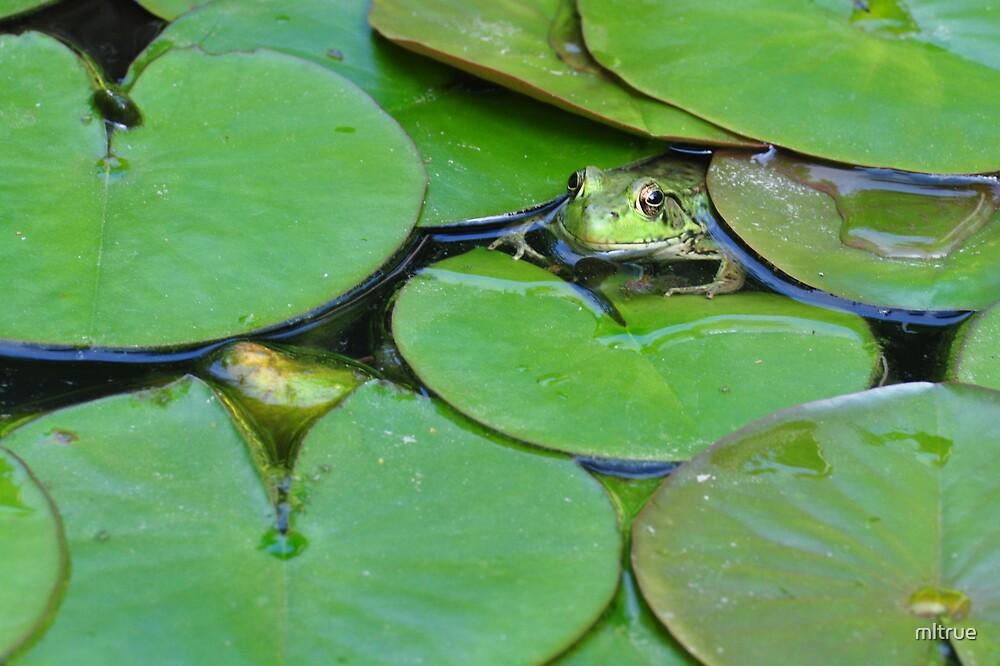 Camo-frog by mltrue