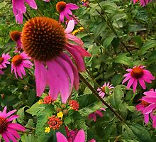 Cone Flower by DArtScapesDbyD
