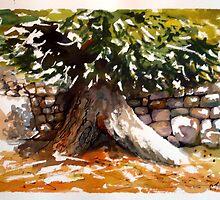 Olive Tree by Enoeda