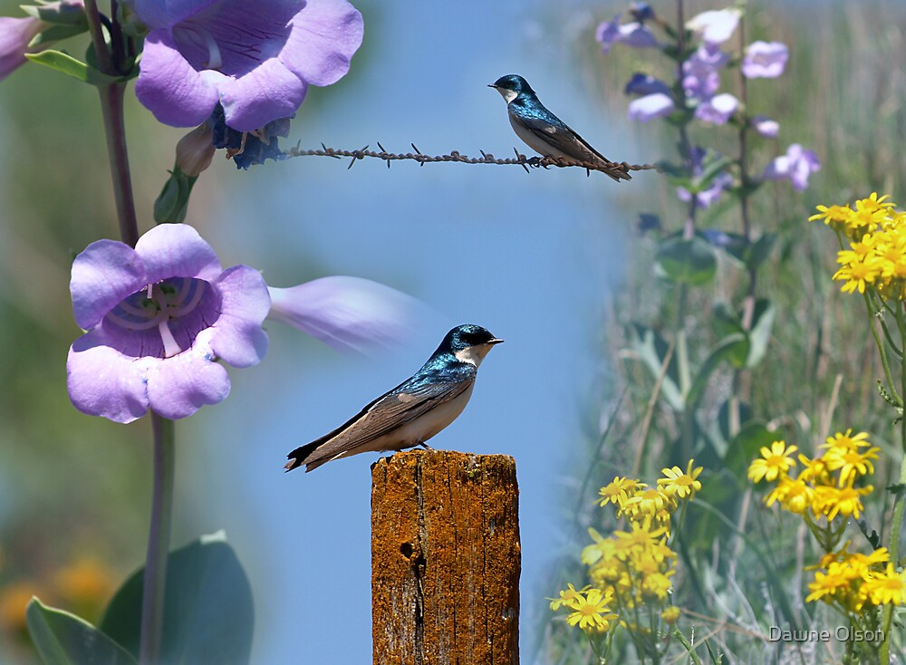 Nebraska Spring by Dawne Olson