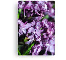 Macro Lilacs Canvas Print