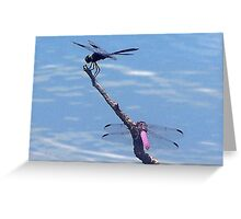 Dragonfly duo in the sun Greeting Card