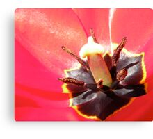 Inside of Red Flower Canvas Print