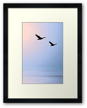 Birds at Sunset by Kimberly Palmer