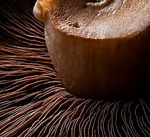 Mushroom Wafers by Andrew Robertson