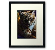 Orange Tabby Cat Framed Print