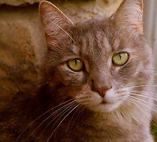 pretty kitty by Michelle  Sogan