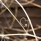 Heart by cas slater