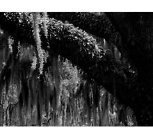 Forest Abstraction ~ Part One Photographic Print
