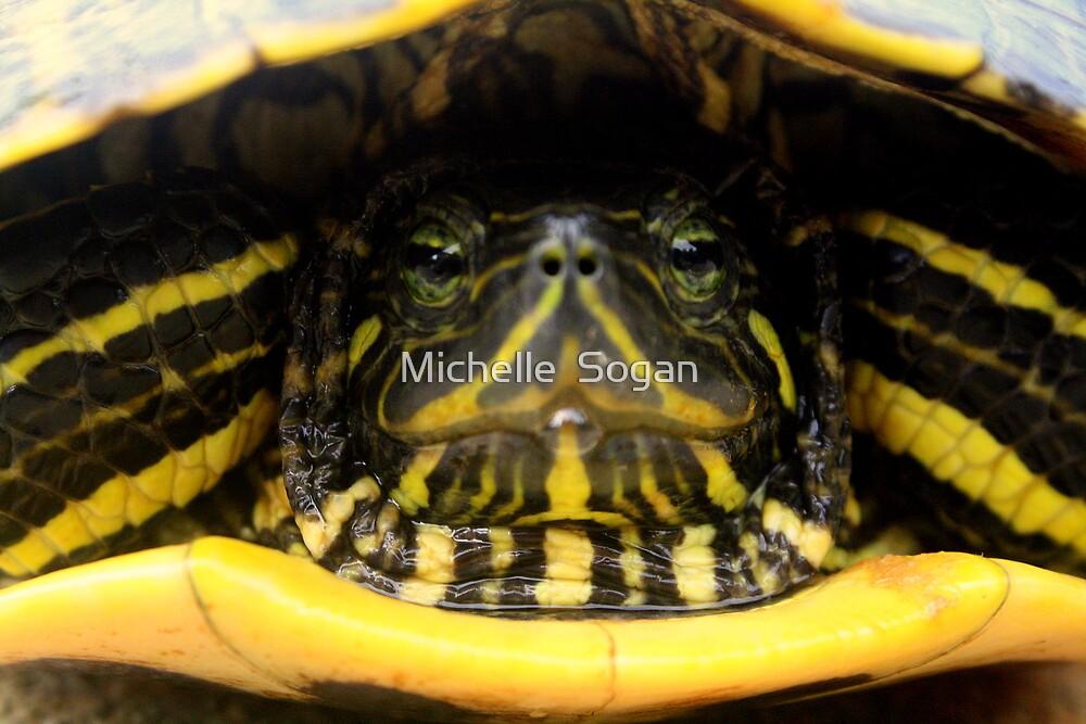 not a ninja turtle by Michelle  Sogan