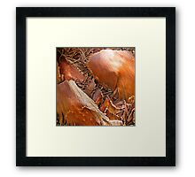 Not really a beetle...  Framed Print