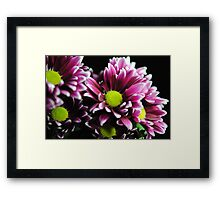 Purple Mums Close Up Framed Print