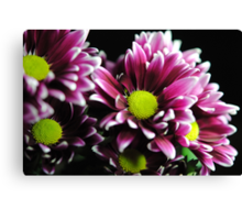 Purple Mums Close Up Canvas Print