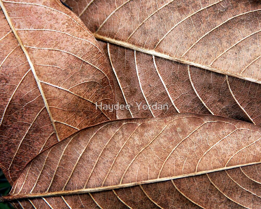 Autumn Leaves by Haydee  Yordan