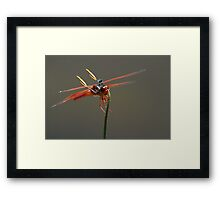 Dragin Fly Framed Print