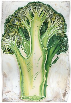 Broccoli by Sarina Tomchin