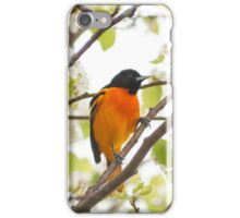 Baltimore Oriole iPhone Case/Skin