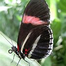Butterfly conservation...(serie II )...! by sendao