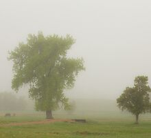 Foggy Country Springtime Morning by Bo Insogna