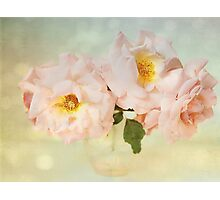 Pretty Pink Antique Roses Photographic Print