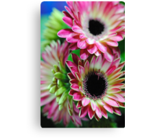 Mini Pink and Cream gerbera Daisies Canvas Print