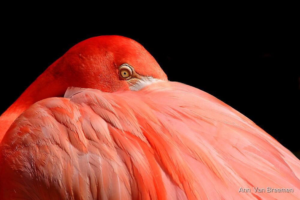 Feather Muff by Ann  Van Breemen