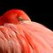 Flamingos!!!