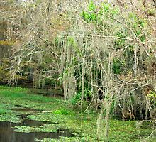 The Glades Swamp by hmclark