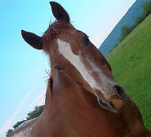 Horse 2 by Lauryn Guyer