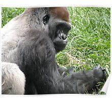 Gorilla 2 Poster