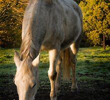 Beatutiful, white horse by Arek Rainczuk