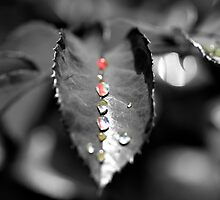 Droplets by Hannah Welbourn